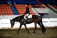 Hunter - AQHA Youth (14-18)