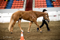 Halter - AQHA Youth Showmanship (14-18)
