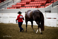 Halter - AQHA Amtr Performance Geldings