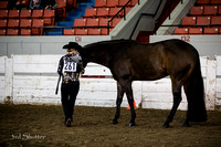 Halter - AQHA Novice Youth Showmanship